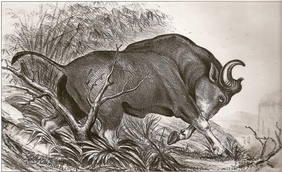 水牛に突き刺され生死をさまよった男が出会った「老子」