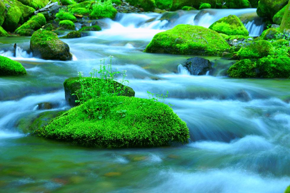 川は急流、水は澄み切る―日本のリーダーの条件「清明心」